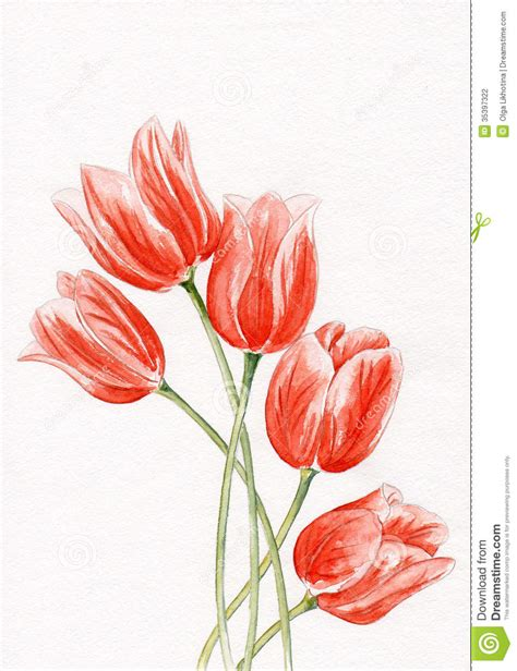 watercolor tulips stock illustration illustration of