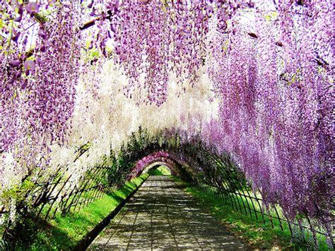 wallpaper pemandangan alam jepang indahnya pemandangan alam di jepang ini pernik dunia