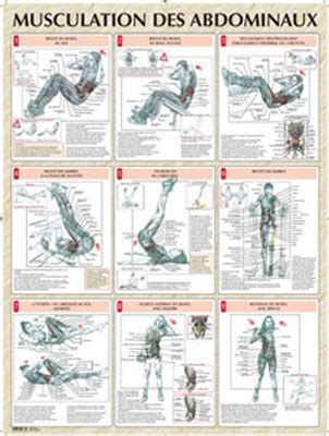 Banc Abdominaux Exercices by Vigot Poster Musculation Abdominaux Livres Posters