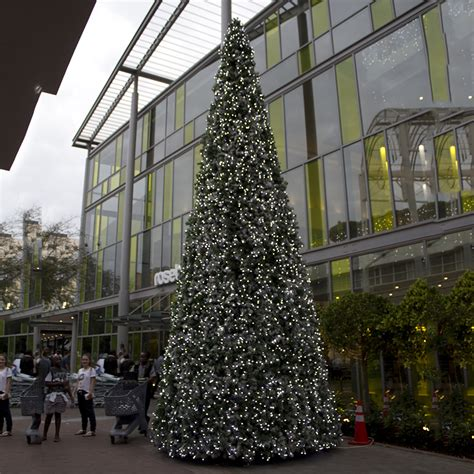 pound landscape christmas trees tree tmcc