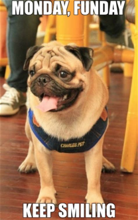 monday pug monday funday pug has lots to smile about talent hounds