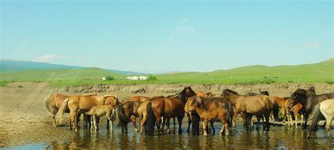 mongolia nomadic  mongolia travel travel  mongolia