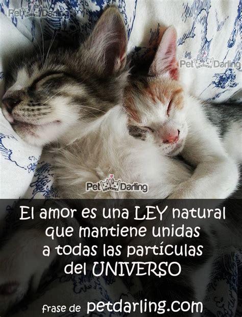 imagenes de amor para el amor de su vida 191 qu 233 es el amor estos gatos te lo cuentan con frases