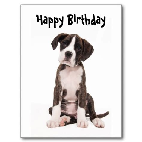 Boxer Cards - boxer puppy birthday card