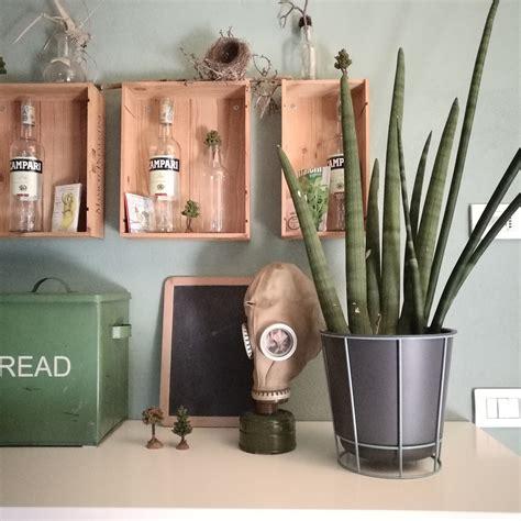 arredare casa con le piante come arredare casa con le piante blossom zine