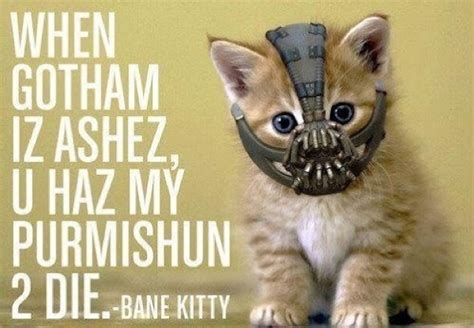 Bane Cat Meme - bane kitty batman know your meme