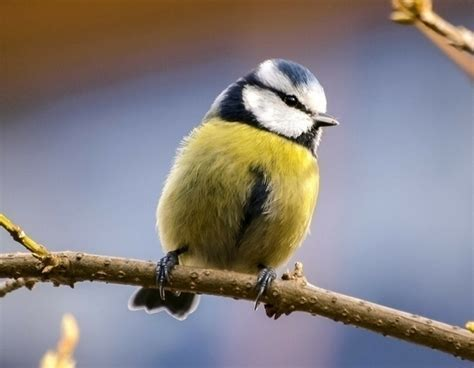 Nourrir Oiseaux Jardin by Nourrir Les Oiseaux Du Jardin En Hiver Conseils