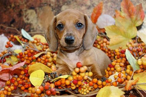 are acorns poisonous to dogs practical paw the toolkit