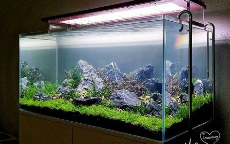 model aquarium ikan hias minimalis terbaru dekor rumah