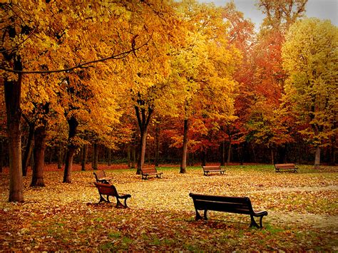 google images of fall images pictures comments graphics scraps for facebook