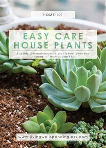 easy to take care of indoor plants low maintenance houseplants easy care house plants