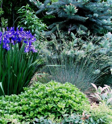 deer resistant plants 133 best images about deer rabbit resistant plants on