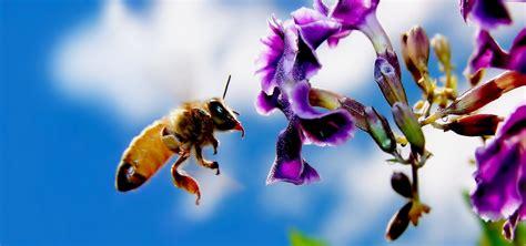 fiori e api hanno fatto le api cronaca di una presunta