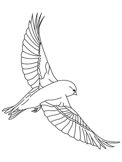 Bird Wing Coloring Page   canary coloring pages download and print canary coloring