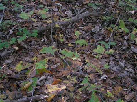 Find On By Photo Can You Spot The Snake In This Picture
