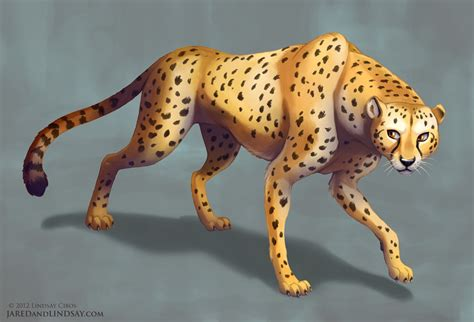 what color is a cheetah lindsay cibos how to draw a cheetah