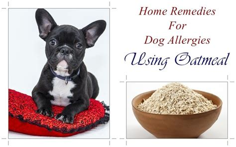 allergy relief for dogs skin allergy remedies for skin allergies breeds picture