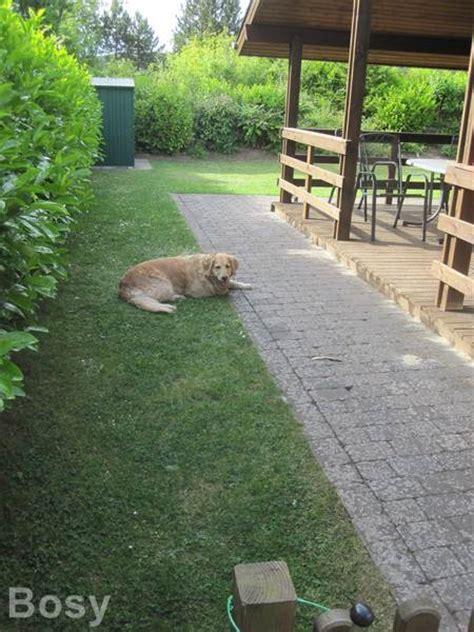 Urlaub Hund Eingezäunten Garten urlaub mit olli