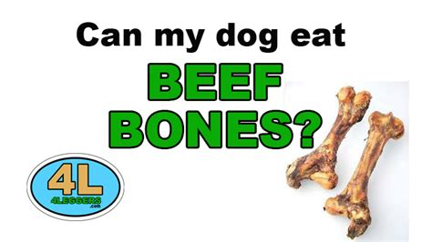 Can My Eat Beef Bones 4leggers
