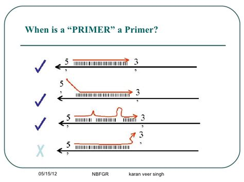 pattern making primer pcr primer desining