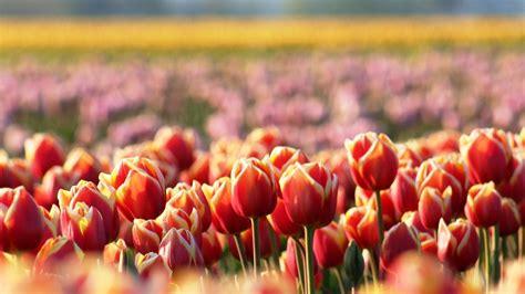 Orchidee Gelbe Blätter 5399 by Die 61 Besten Hintergrundbilder Blumen