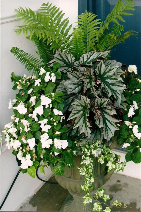 outside plants ferns impatiens begonia and ivy wonderful shade urn