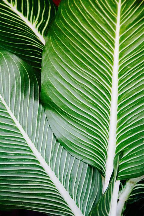 Mooie Planten Voor Binnen 5 mooie planten voor binnen woonprettig nl