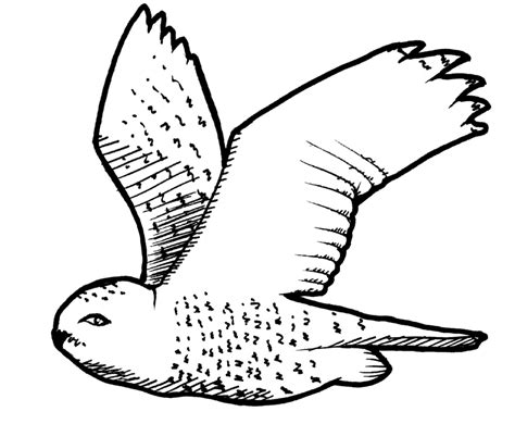 coloring page snowy owl snowy owl coloring pages az coloring pages