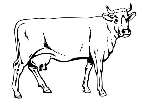 Coloring Page Cow free printable cow coloring pages for