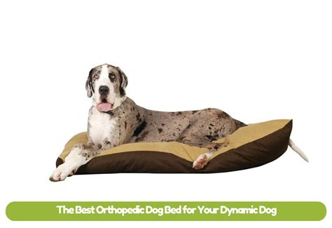best orthopedic dog beds the best orthopedic dog bed for your dynamic dog mysweetpuppy net