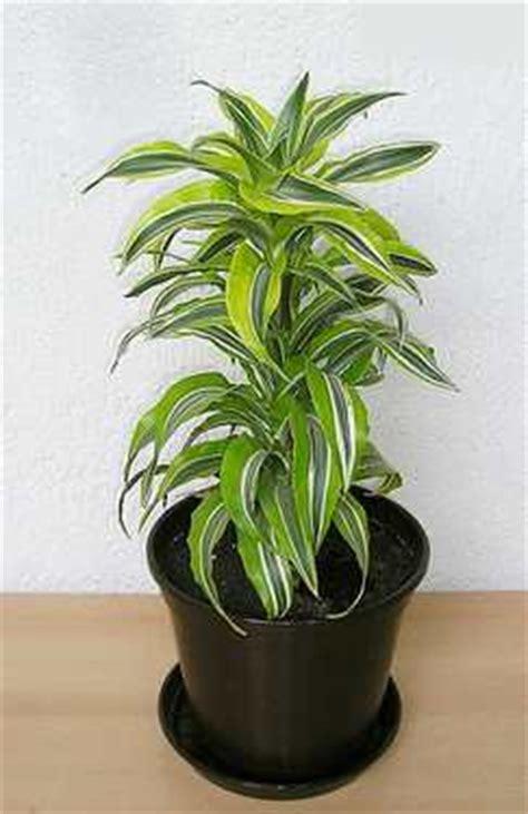air filtering house plants   nasa