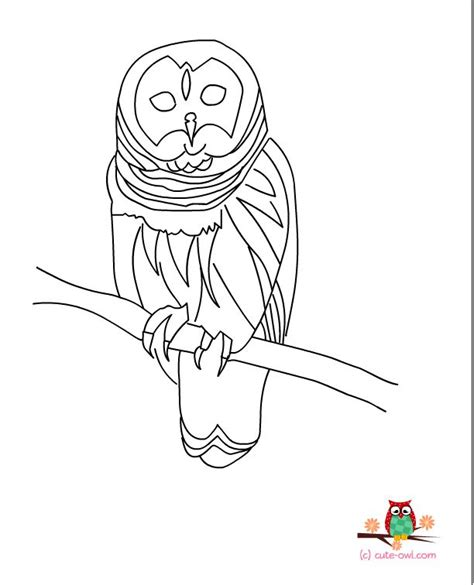 realistic owl coloring page 41 best owls draw images on pinterest barn owls owls