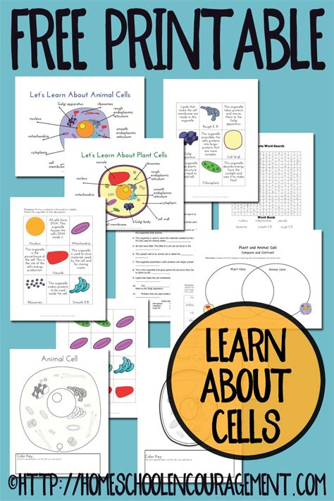 printable animal and plant cell plant and animal cell printables grades 4 6
