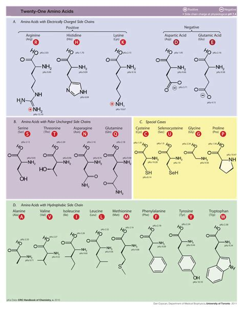 amino acid table rosalind glossary amino acid