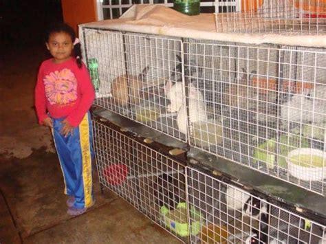 jaulas conejeras industriales una de las jaulas y sus 30 conejos ref 15046