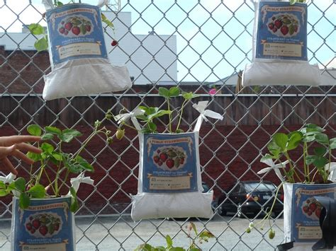 Gardening Hashtags Prototyping San Francisco The Fruit Fence Is A