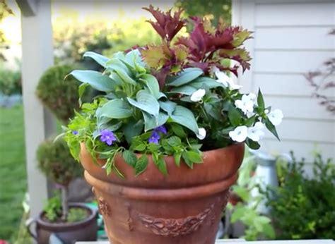 really simple shade loving planter garden lovers club