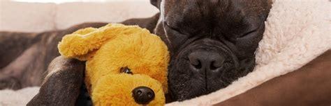 best dog beds review 10 best dog beds review buying guide 2018