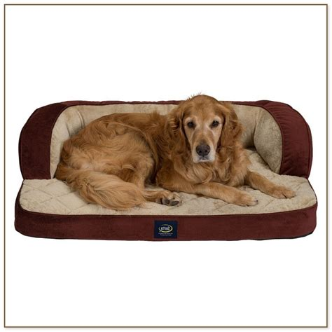 beds for dogs dog beds for medium sized dogs dog beds and costumes