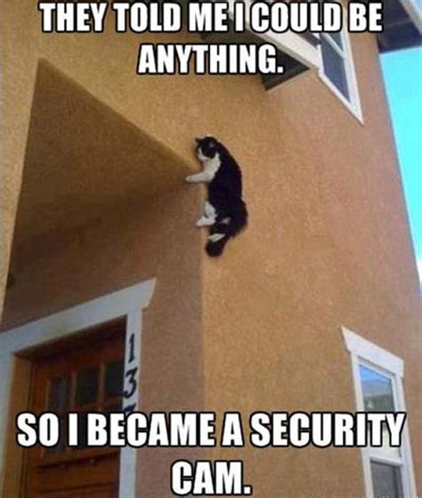 Meme Camera - security cat