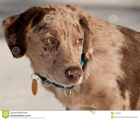 puppy profile profile stock images image 17680024