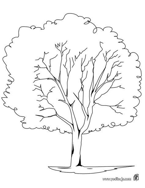 imagenes para dibujar un arbol dibujos para colorear un 225 rbol pl 225 tano es hellokids com