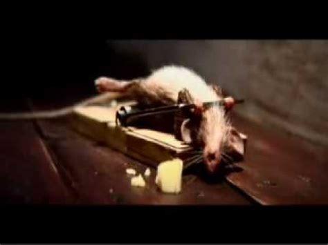 mouse benching mouse trap o rato e a ratoeira youtube