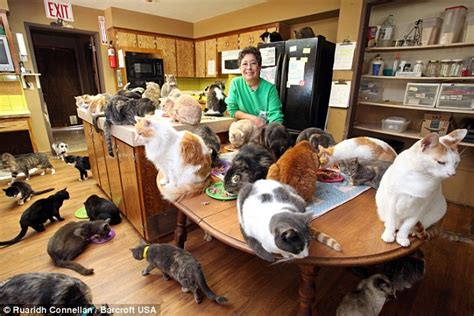 cat house on the kings cat house on the kings lynea lattanzio lives with 1 000 feral felines daily mail online