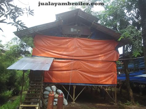 Jual Bibit Ayam Broiler Di Tangerang jual ayam broiler di jakarta utara jual ayam broiler