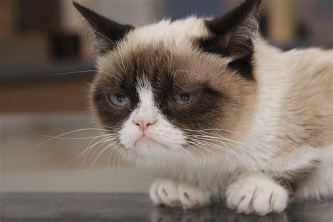 gets kitten grumpy cat gets a deal