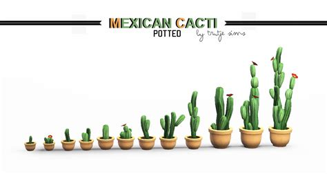 potted cacti  trutje liquid sims