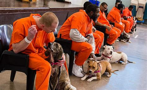 prison dogs going to prison was the best thing that happened to these dogs here s why