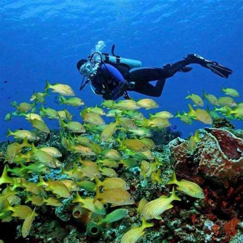 dive cozumel dive and drive cozumel with discover scuba diving course