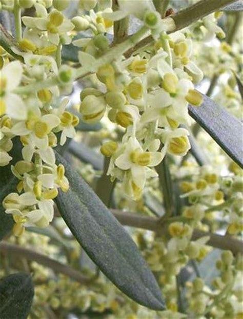 come prendere i fiori di bach fiori di bach per la mancanza di energia la curandera